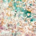 Waktunya Bonus Spring